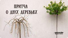 Поющие в Душе: Притча о двух деревьях Blog, Decor, Decoration, Decorating, Deco, Embellishments