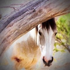 The horse. Here is nobility without conceit friendship without envy beauty without vanity. A willing servant yet never a slave.  Ronald Duncan #westernart#equineart#horseart#southwesternart#horses#arizonaart#horsesofinstagram#fineart#phaseonephoto#captureone#100millionpixels