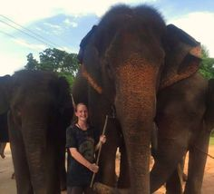 My First Blog Post: Where to Begin? First Blog Post, Elephant, Posts, In This Moment, Travel, Voyage, Messages, Elephants, Viajes