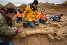 """Archeologists working along the Changis-sur-Marne riverbank about 30 miles (50 Km) east of Paris, after unearthing the rare near complete skeleton of a mammoth, which has been christened """"Helmut"""". The remains which include four connected vertebrae and a complete pelvis, dating back some 200,000-500,000 years ago, were discovered by accident during excavations at an Ancient Roman site.  ArtDaily Newsletter: Thursday, November 08, 2012 - Inbox - Yahoo! Mail"""