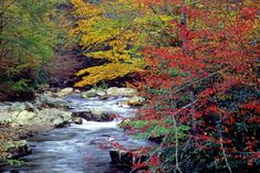 Cataloochee Valley in Great Smoky Mountains National Park.  I got engaged along this river!