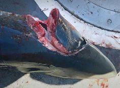 «Θρίλερ» στα παράλια της Μεγάλης Βρετανίας – Τι είναι αυτό που τρώει καρχαρίες