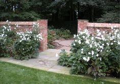 Plant Pictures, Outdoor Living, Outdoor Decor, White Gardens, Dream Garden, Garden Inspiration, The Great Outdoors, Garden Plants, Sidewalk