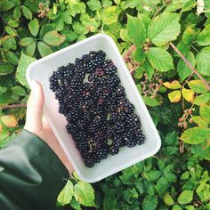 Berries picked by me in the forrest! Fruit is the best