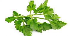 The herb chervil is from the thyme family of herbs and is used in regularly food. This herb is commonly used in French food along with other Herbs like parsley, Nutrition Classes, Nutrition Guide, Food For Digestion, Holistic Remedies, Natural Herbs, French Food, Flower Show, Small Gardens, Masks