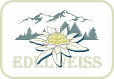 Blooming edelweiss flower. Symbol of Alp mountains. Beautiful postcard. Badge. Leontopodium alpinum.