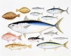 「魚 イラスト」の画像検索結果