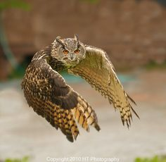 Eagle owls are among the largest winged hunters on the planet and combine their size with incredible ferocity. They will eat almost anything and stop at nothing.