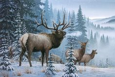 Storm's End - Rocky Mountain Elk painting by Larry Zach