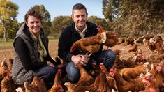 Cage-free? Coronavirus shows why we should care about which eggs we buy, RSPCA says Types Of Farming, Types Of Eggs, Farming System, Free Range, Cage, This Is Us, Stuffed Mushrooms, Happenings, Articles
