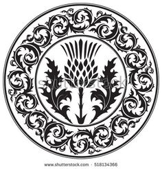 Thistle flower and ornament round leaf thistle. The Symbol Of Scotland, isolated on white, vector illustration Celtic Patterns, Celtic Designs, Vector Clipart, Vector Art, Scottish Symbols, Leaf Symbol, Thistle Flower, Stencils, Zentangle