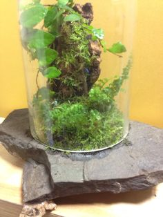 #terrarium#jungle#scape#flowers#in glass#