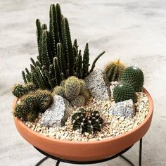 38 Graceful Indoor Cactus Gardens Design Ideas To Try This Day - Indoor plants, also known as household plants are a great way to brighten up and decorate your home or office. Growing indoors is easy. Indoor Cactus Garden, Cactus House Plants, Cactus Decor, Cactus Terrarium, Plant Decor, Cactus Garden Ideas, Indoor Plants, Cactus E Suculentas, Household Plants