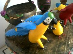 parrot in totumo