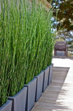 Bamboo Privacy Screen - great alternative to a regular privacy wall and planting…