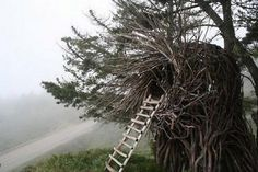 """The director of the Big Sur Spirit Garden, Jayson Fann, he makes giant, human-sized nests for people.  These """"spirits nests"""" are often made out of Eucalyptus wood. Fann harvests it himself, he says, with the help of a few assistants."""