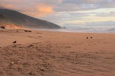 Sunset over a beach on the Heaphy Track in Kahurangi National Park. Great Walks, South Island, North West, Conservation, Wilderness, New Zealand, Fields, Coastal, National Parks