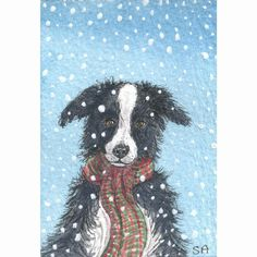 ACEO - Limited Edition Print - His holiday scarf - Susan Alison Border collie dog art
