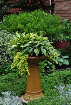 3 beautiful birdbath planters, gardening, outdoor living, pets animals, This is at the front of a really nice private garden There is a mix of hosta and Creeping Jenny See more