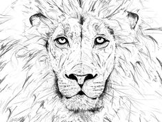 Lion King (sketch) by Martin Roberts White Pen, Black And White, Forest Tattoos, Sketch Design, Disney Art, Lions, Pen Drawings, South Africa, Animals