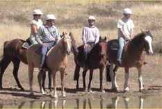 Horseback riding in Burnlee Horse Riding, Horseback Riding, Cattle, Acre, Countryside, Sheep, Wildlife, Suit, Horses