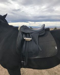 Man I love this saddle Cute Baby Animals, Animals And Pets, Lauren Johnson, All About Horses, Horse Girl, Equestrian Style, Horse Tack, Horse Riding, Beautiful Horses
