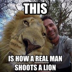 Kevin Richardson, the lion whisperer <3