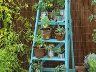 Placing small pots on an outstretched ladder is a good way to maximize a small space. Especially good for pots of herbs or plants that trail.