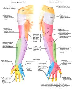 cervical bilateral radiating pain elbow - Google Search