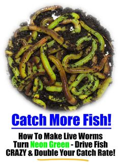 How To Make Live Composting Worms Turn Neon Green To Drive Fish Crazy and…