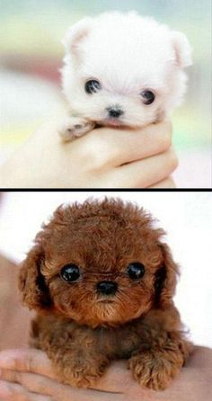 """I can't help but talk baby talk to these """"cutie wootie wittle puppies"""""""