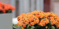 Δες 10 Φυτά που απαιτούν ελάχιστο πότισμα! Greek Sweets, Lemon Cheesecake, Cooking, Plants, Food, Lime Cheesecake, Kitchen, Essen, Meals
