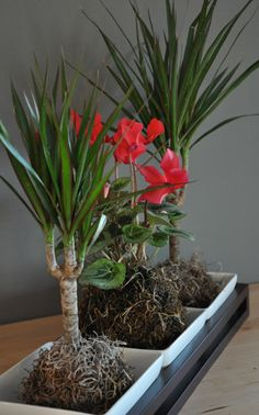 As the Japanase gardening technique of 'kokedama' grows in popularity, we take   a look at displays by some of the movement's leading designers.