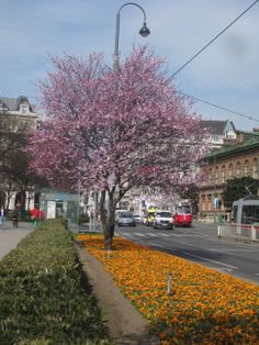 PhotoWien by RLeeb - spring in Vienna