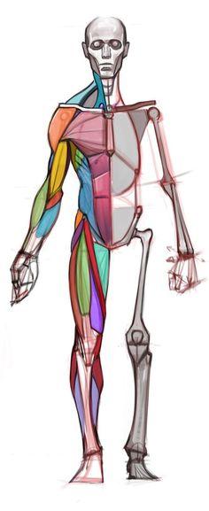 anatomi-model-karakalem-çizimleri-zs5a