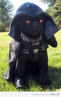 Bark Vader // The Force is strong with this one