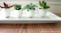 Succulents planted in eggshells by The Hunted Interior