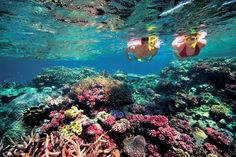 Snorkel in the waters of a Great Barrier Reef. (Coral Sea, Coast of Queensland, Australia)