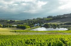 From watching movies under the stars to extravagant dinners, here are our suggestions for things to do this Valentine's Day in the Cape Winelands. Tourism In South Africa, South African Wine, Movies Under The Stars, Wine Tourism, Places Of Interest, Cape Town, Touring, Things To Do, River