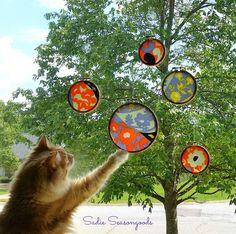 Cottonball Playing with Sun catchers Made from Old Worn Scarves and Embroidery Hoops - by SadieSeasongoods - Hometalk - 12-29-15