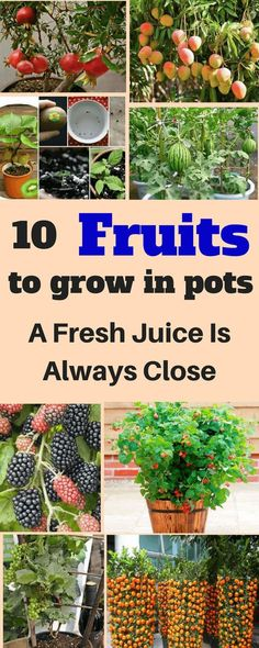 Here are 10 fruits to grow in pots, and I'm sure if you follow this guide that you will wave stress goodbye. #garden#gardening#fruits #fruitgarden