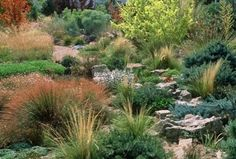 Another heat-loving garden by Scott Ogden and Lauren Springer Ogden — grasses, conifers and native perennials. (btw, If you love this, read Plant Driven Design.)