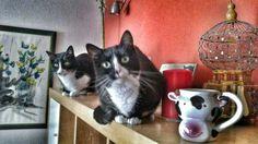 Els meus gatets :-)