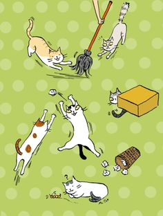貓小姐的光陰筆記 - udn部落格 Cats love to house cleaning day!