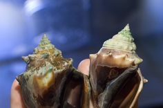 In CO2-rich Environment, Some Ocean Dwellers Increase Shell ...