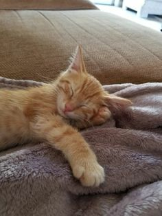 Sleeping Animals, Jungle Cat, Orange Tabby Cats, Sleepy Cat, Ginger Cats, Cute Cats And Kittens, Maine Coon, Beautiful Cats, Funny Cats