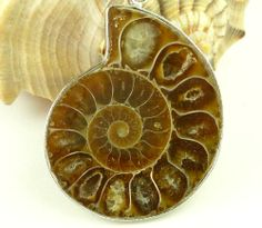 Fossilized Ammonite Silver Pendant Deep Brown Spiral Pattern | dianesdangles - Jewelry on ArtFire #afpounce #TY