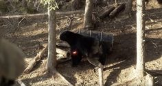 Keith Warren filmed what may be the best bear hunting video of all time this spring in Canada. Take a look and see what you think about it.