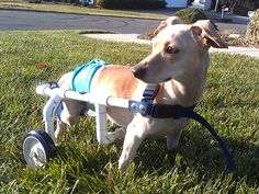 Jerry West Builds Wheelchairs for Dogs in Need| Heroes Among Us, Good Deeds, Real People Stories, Real Heroes, Animals & Pets, Hero Pets, Un...