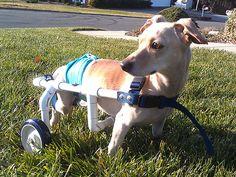 doggie-wheelchair-1-600.jpg (600×450)
